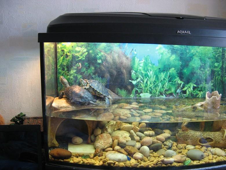 Черепаха на островке