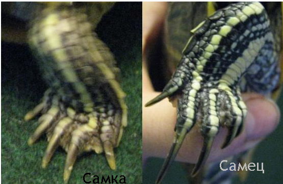 Самец и самка черепахи