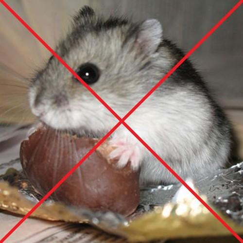 Хомяки хлеб не должны есть