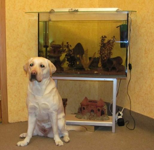 Большой 250 литровый аквариум