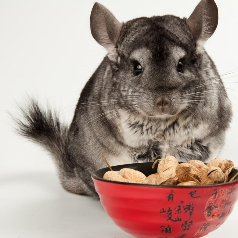 Орехи для шиншиллы деликатес