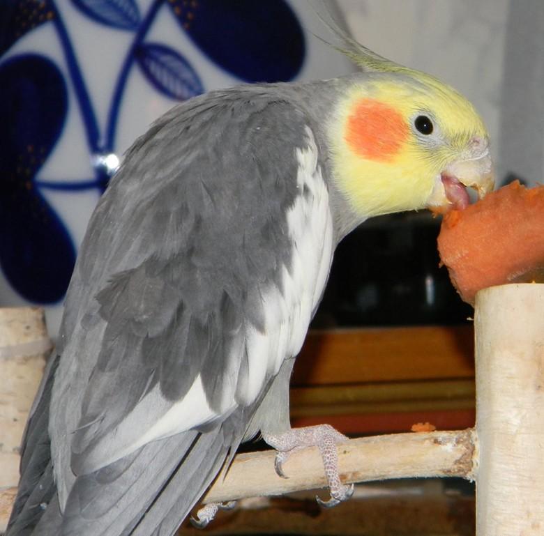 Корелла есть морковку