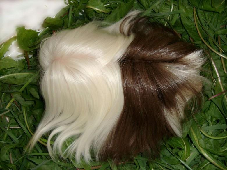 красивые волосы перуанской свинки