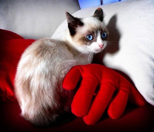 Котенок снежная туфелька сноу шу