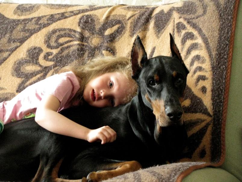доберман и маленькая девочка