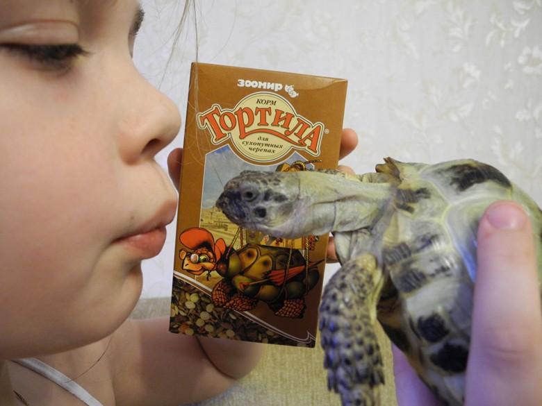 среднеазиатская черепаха и ребенок