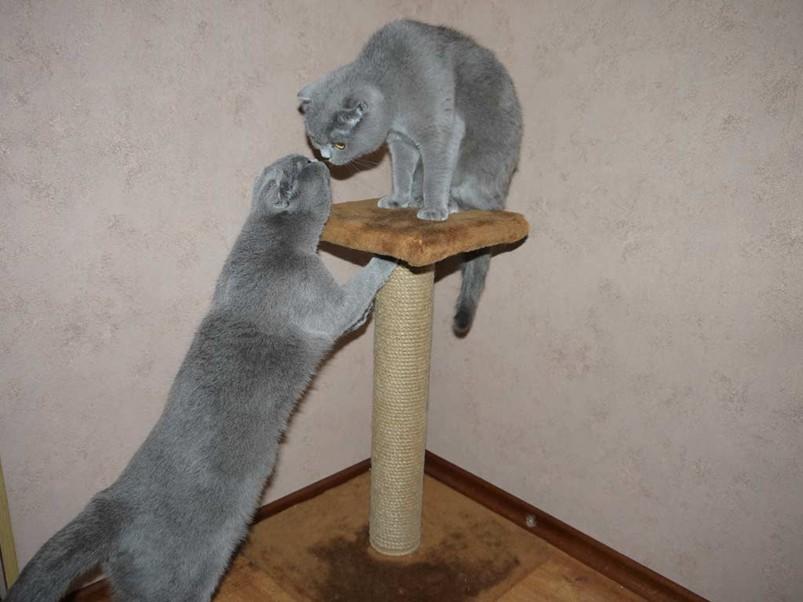 Точилка когтей для кошек