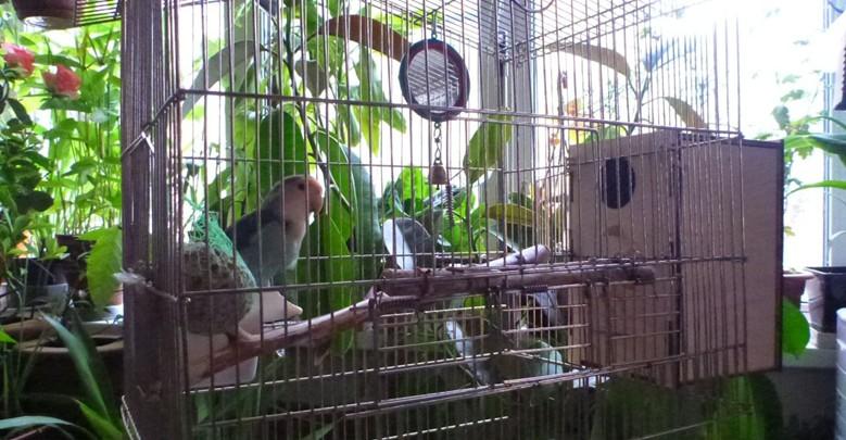 озеленение квартиры для птиц