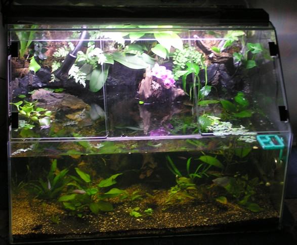 аквариум для каспийской черепахи