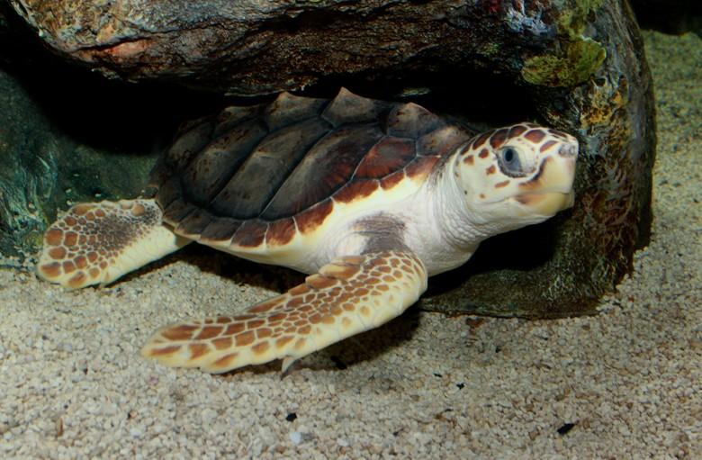 черепаха спряталась от любопытных