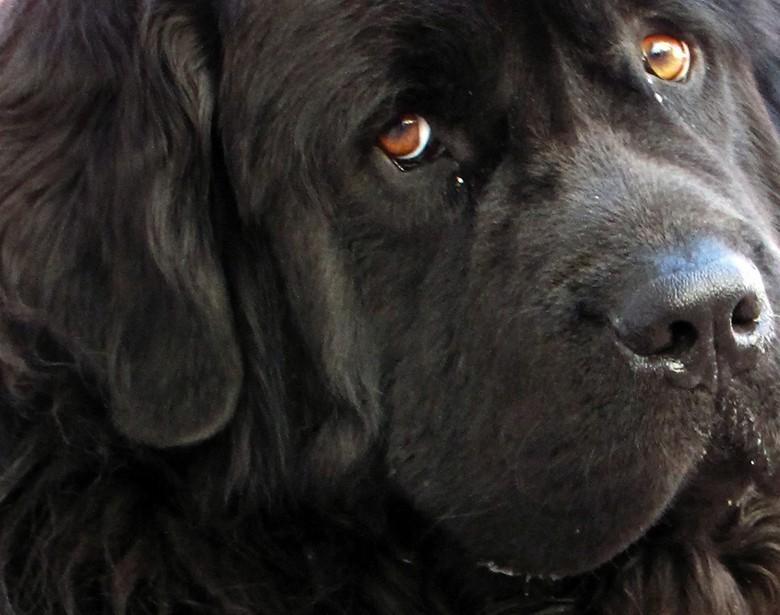 добрые глаза собаки