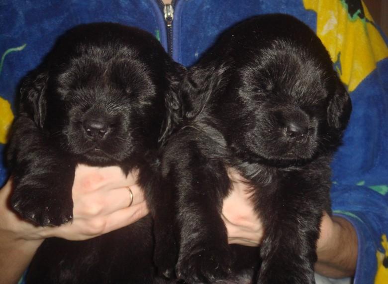 два маленьких щенка