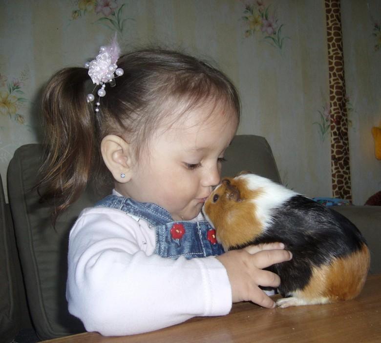 свинка и ребенок
