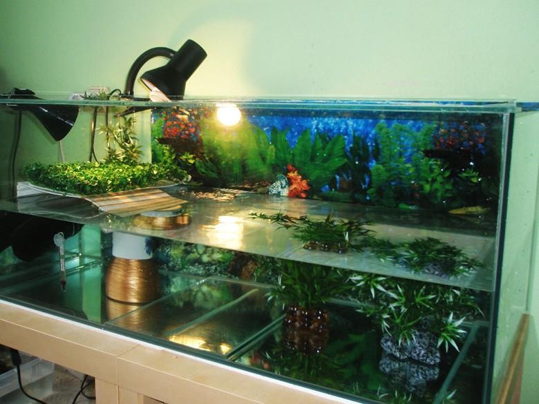 большой аквариум для черепахи
