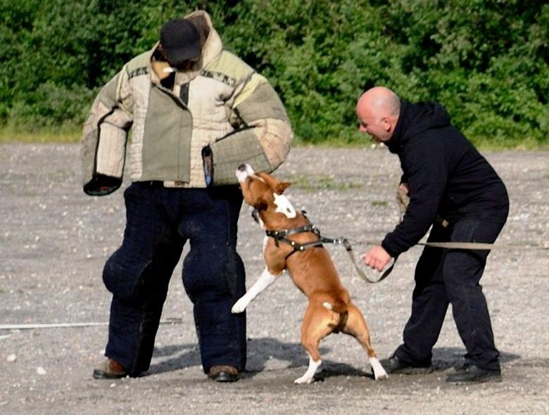 Обучение собаки нападению