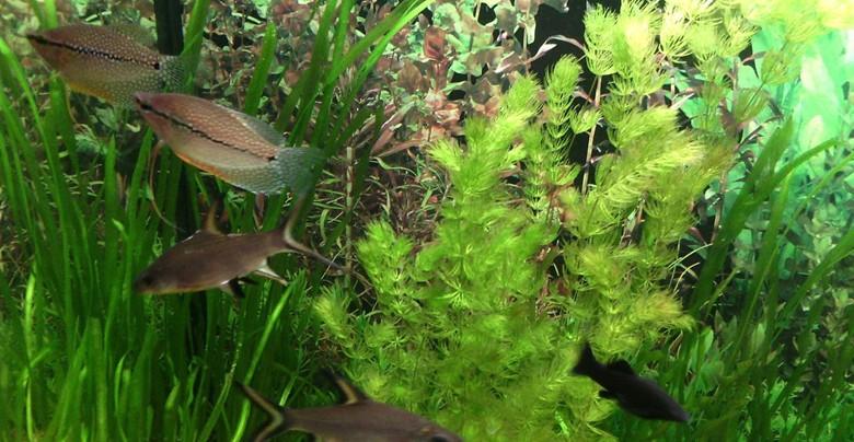 хороший для рыбок аквариум