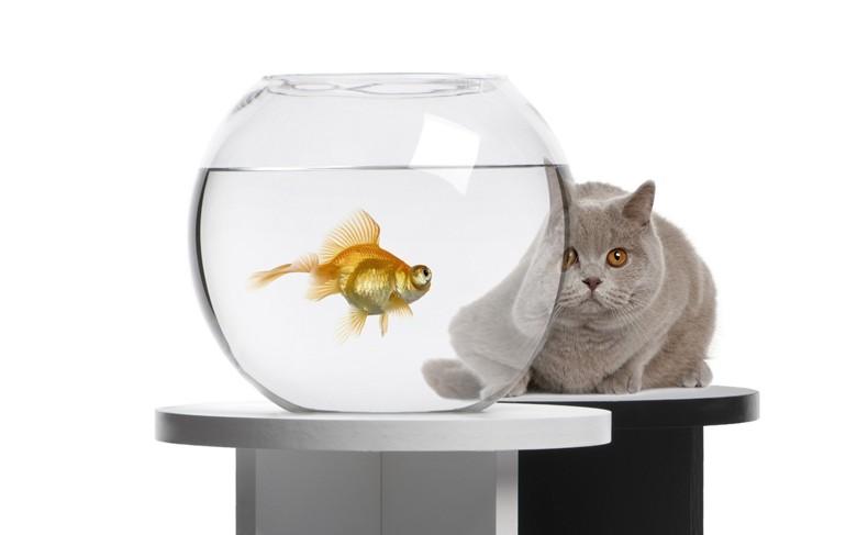 маленький для рыбки аквариум