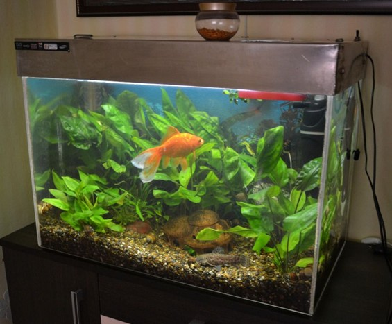 подходящий большой аквариум