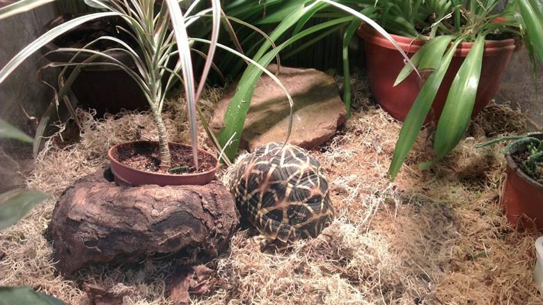 черепаха в зоопарке