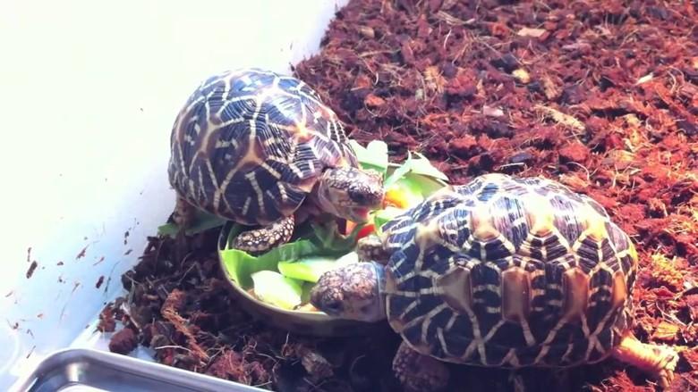 черепахи едят