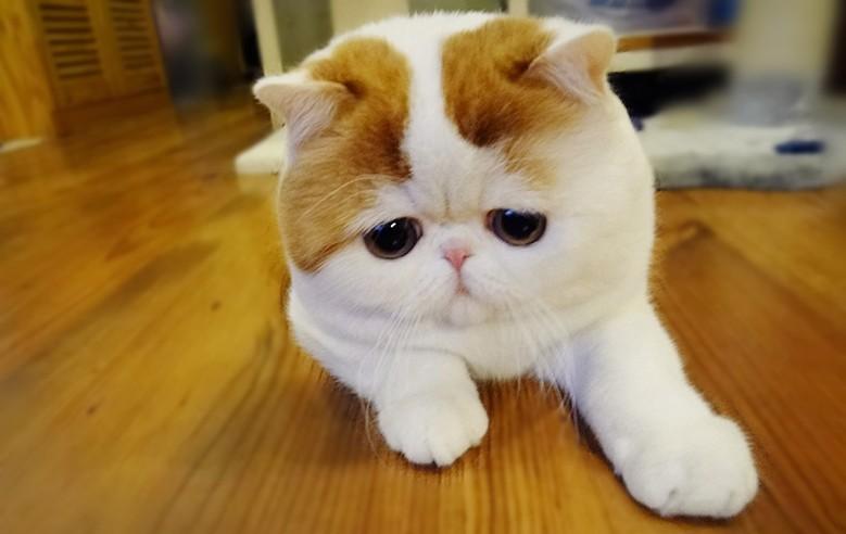 кошка с грустным взглядом