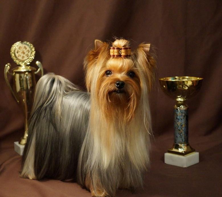 пэт, брид, и шоу классы собак