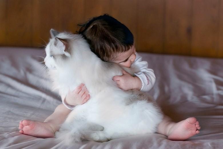 кошка рэгдолл любит детей