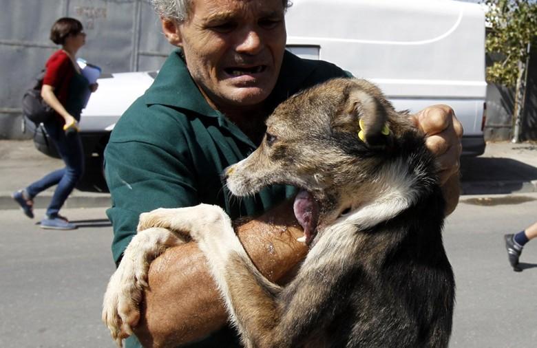 собака напала не человека