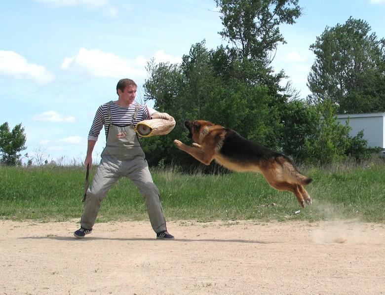 Оборона, если нападает собака
