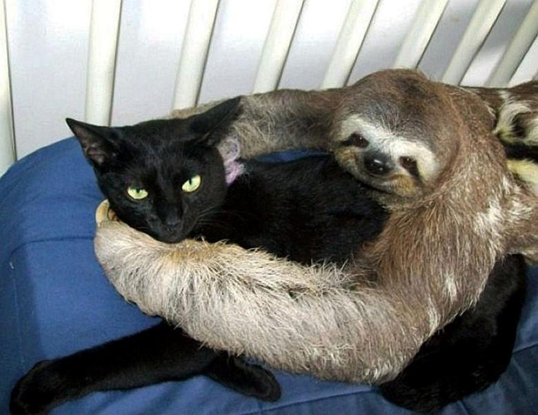 ленивец и животные