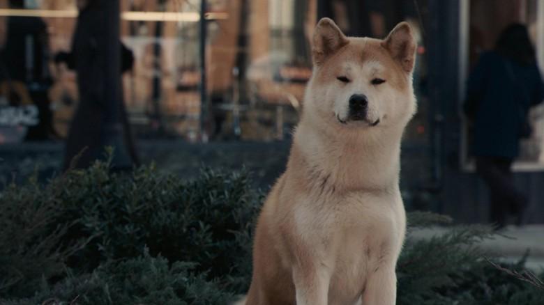 Хатико, трогательный фильм