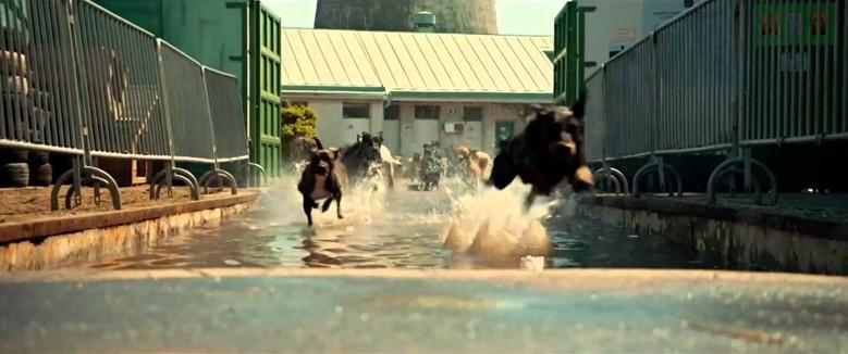 Фильм о собаках