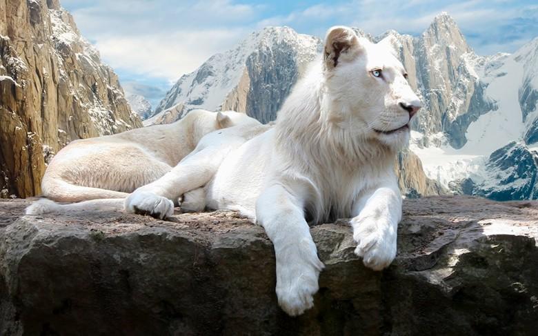 приключения белого льва