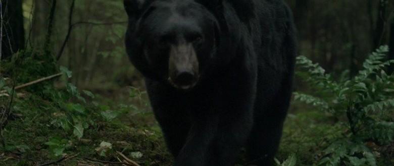 фильмы про животных, трагедия