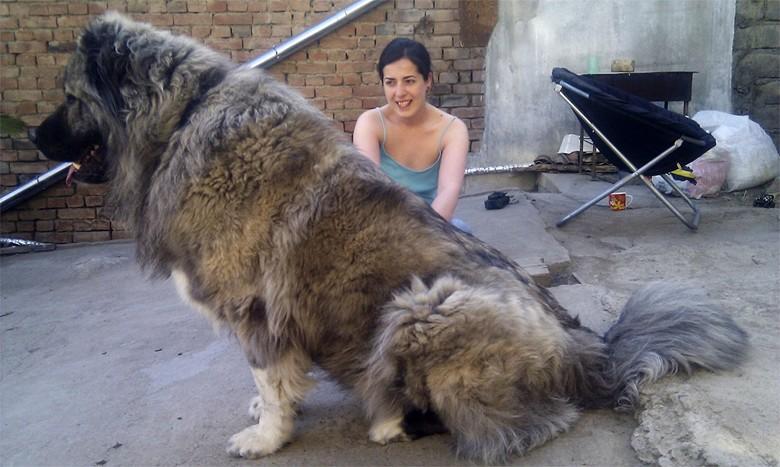 крупная порода собак
