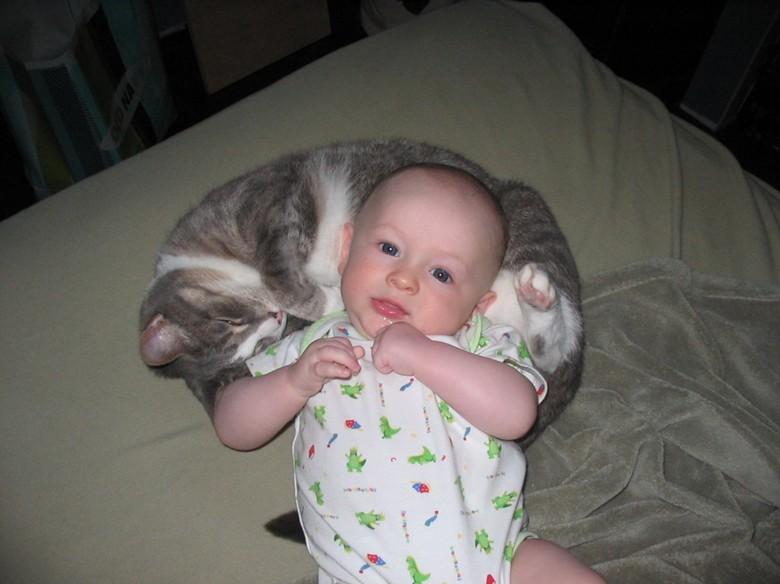выбор питомца для ребенка - кошка