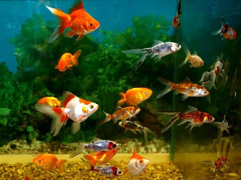 красивый аквариум с рыбами