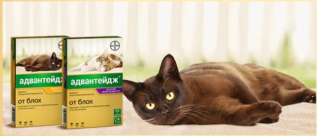 средство для кошек против паразитов