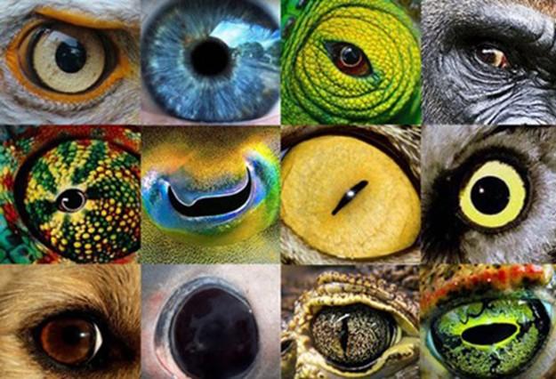 глаза разных животных