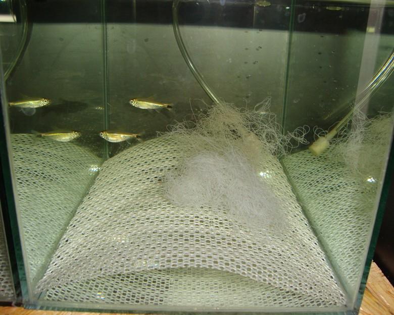 Детский сад для рыбок