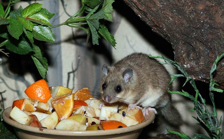 соня ест фрукты