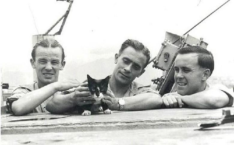 кот спасает корабль