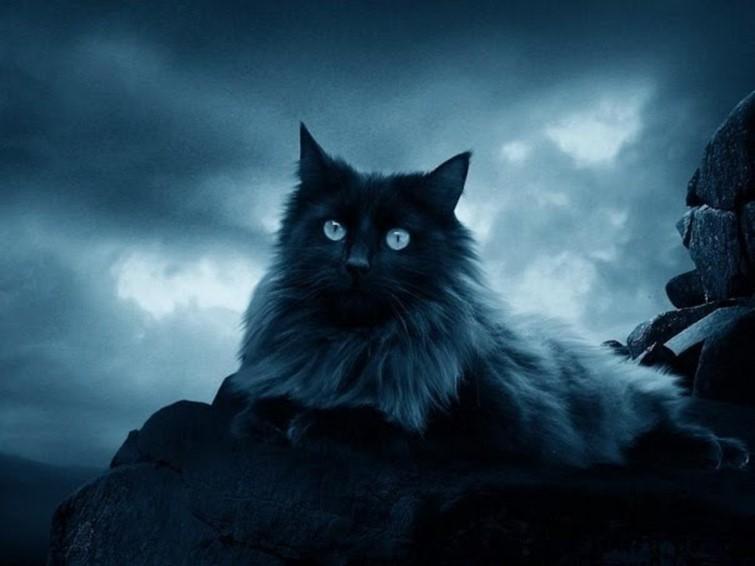 кошка предсказатель