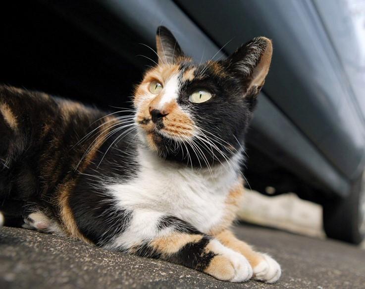 о чем предупреждают кошки по окрасу