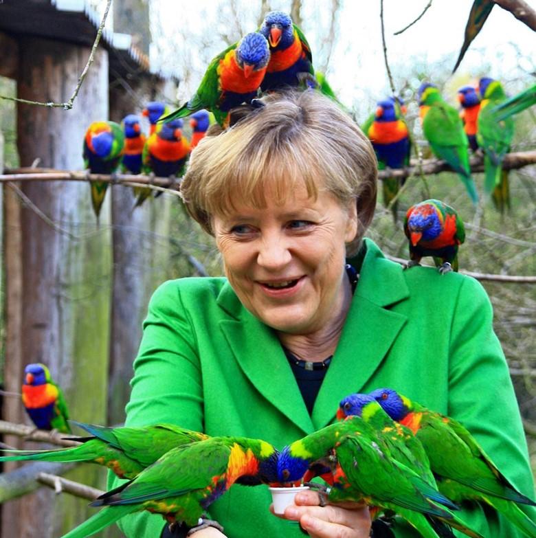 президент и попугаи