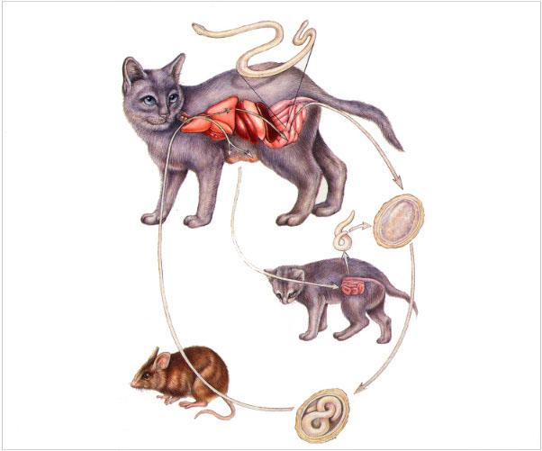 заболевание гельминтоз у кошек