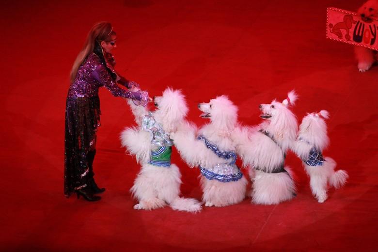 собаки на арене цирка