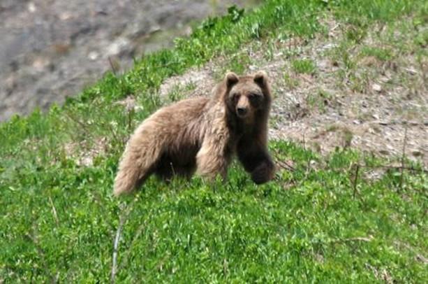 медведь на территории заповедника Сочи