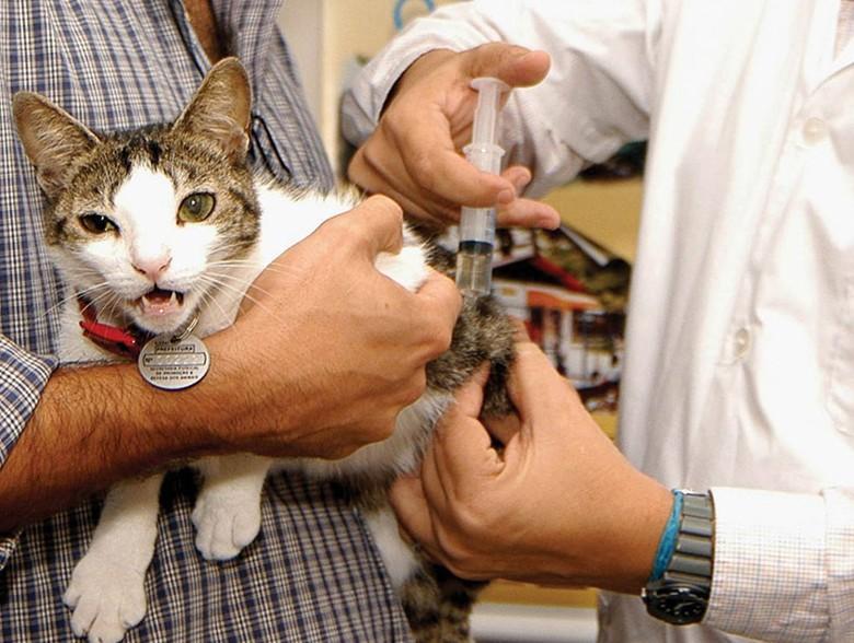 питомцы у ветеринарного доктора