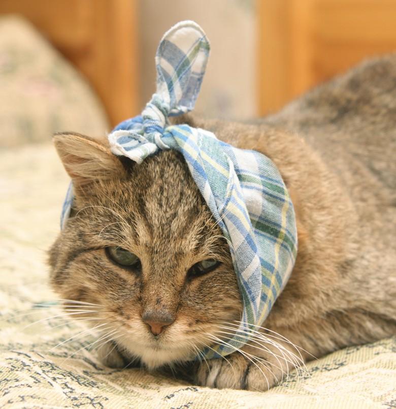 Отит у кошек, заболевание уха